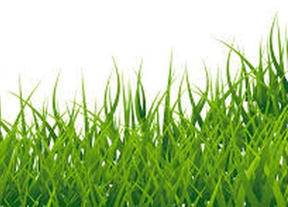 M3 Grass & Turf Installation Broward – Artificial The best of all artificial turf installation compa: mad_potpourri