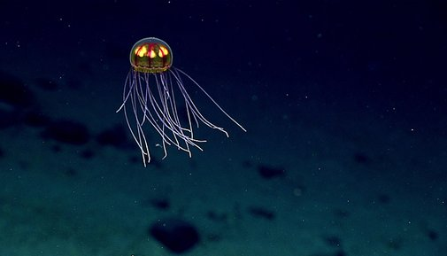 10 greatest sightings, so far, from NOAA's exploration of the deepwater Pacific