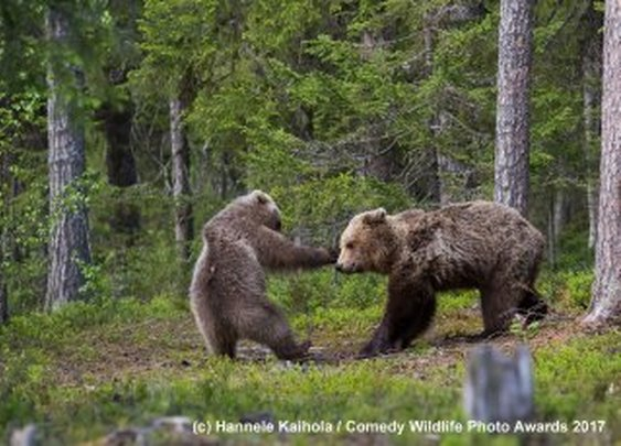 2017 Finalists :: Comedy Wildlife Photography Awards