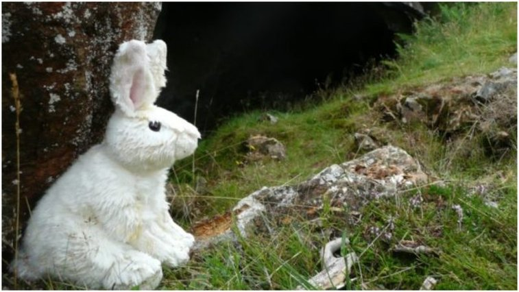 In search of Monty Python's Killer Rabbit and Wooden Witch