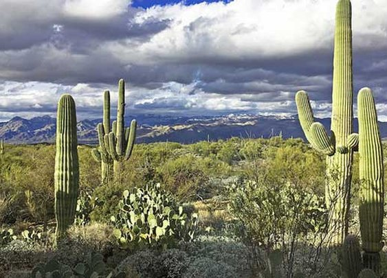 National parks in Arizona using microchip tech to deter thieves