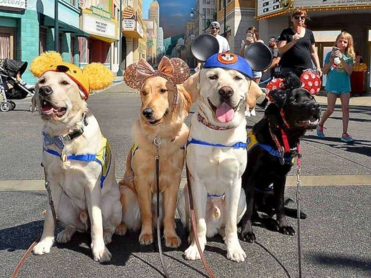 Service dogs visiting Disneyland will make your day