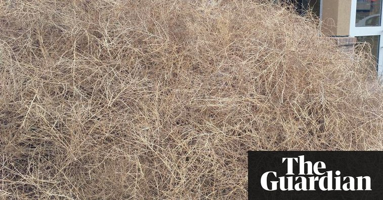 California Town Overrun by Tumbleweeds