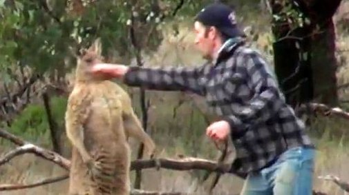 Expert explains why kangaroo punched by zookeeper had dog in headlock