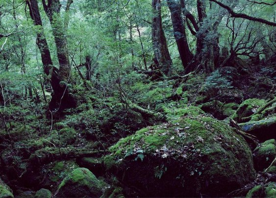 A Real-Life Enchanted Forest
