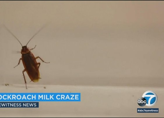 'Cockroach milk' is latest superfood trend