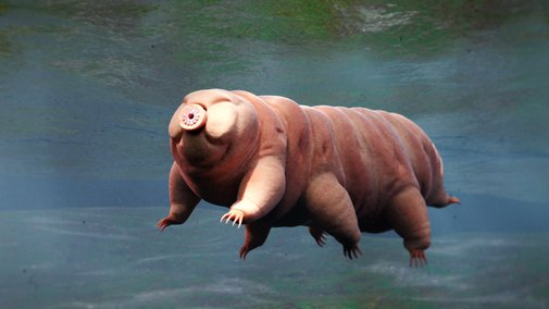 How Long Do Tardigrades Live?