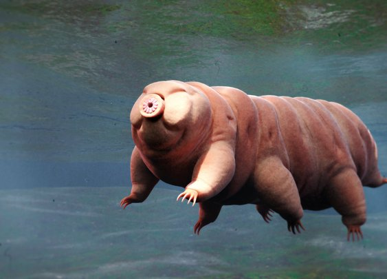 How Long Do Tardigrades Live?
