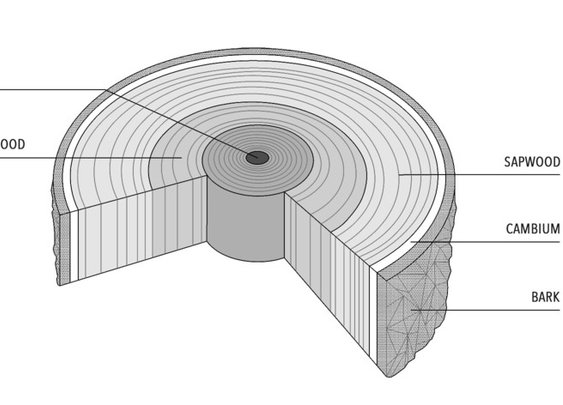 How Tree Trunks Are Cut to Produce Wood With Different Appearances and Uses