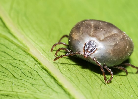 We Have No Idea How Bad the US Tick Problem Is