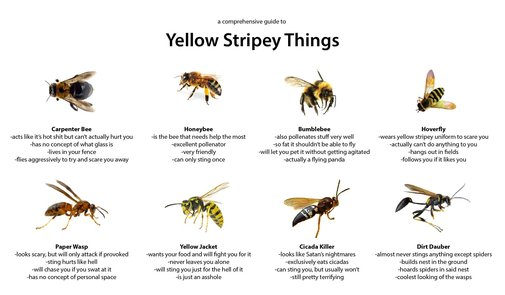 A comprehensive guide to yellow stripey things.