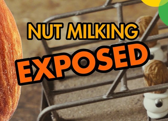 Nut Milking EXPOSED