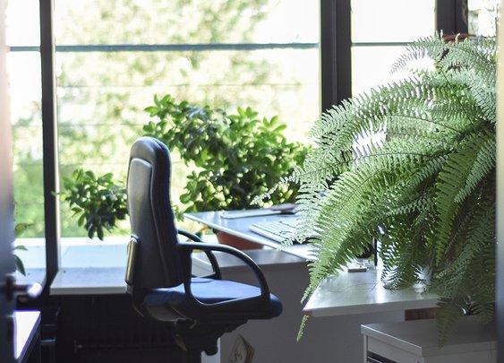 The #1 Office Perk? Natural Light