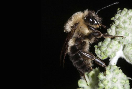 Busy Bees Take a Break During Total Solar Eclipses