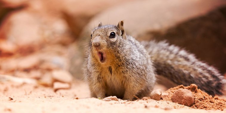 A Man Contracted a Rare, Fatal Disease From Eating Squirrel Brains