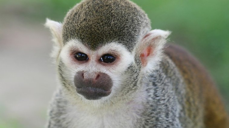 Stoned Man Breaks Into Zoo, Gets Bashed By Tiny Monkeys