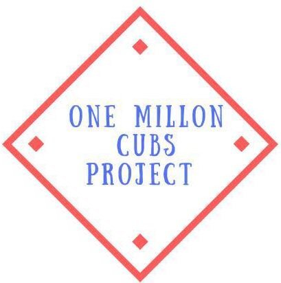 Wisconsin Man Has Goal Of Collecting 1 Million Cubs Cards