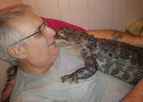 Meet Wally, the Emotional Support Alligator