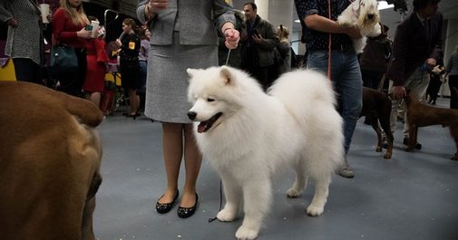 Behind the Scenes: Turning the Westminster Dog Show Into a Social Media Sensation – Adweek