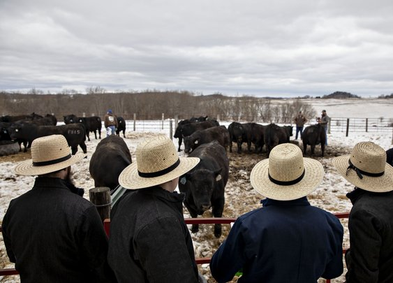 Moneyball for Cattle Is Creating an American Steak Renaissance