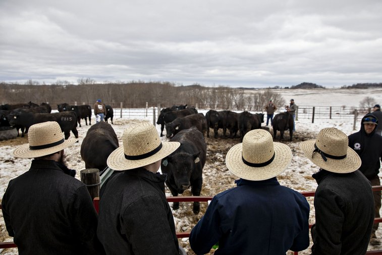Moneyball for Cattle Is Creating an American Steak Renaissance
