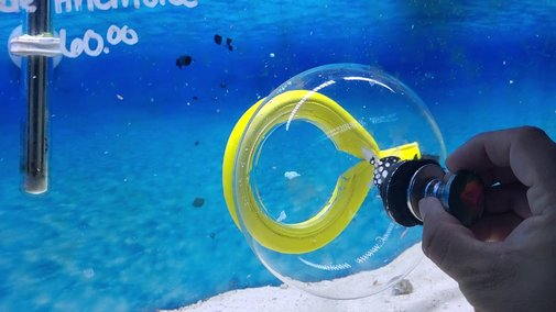 Bubble Fish Trap In Action Catching A Clown Triggerfish - YouTube