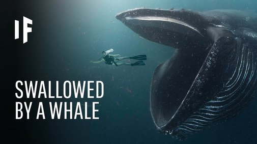 What If You Were Swallowed by a Whale? - YouTube