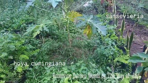 Removing Garden Weeds - YouTube