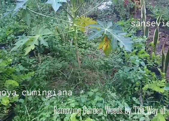 Removing Garden Weeds - YouTube
