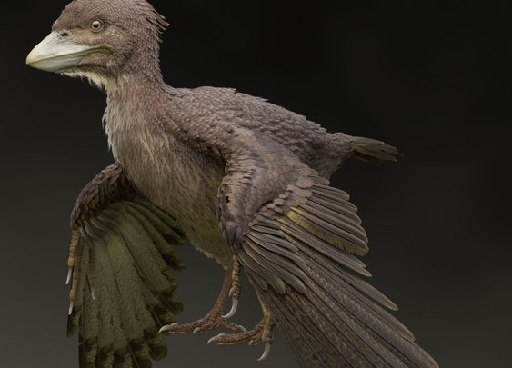 Newly Discovered Fossil Bird Fills in Gap Between Dinosaurs and Modern Fliers | Science | Smithsonian