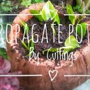 Propagating Pothos From Cuttings - YouTube