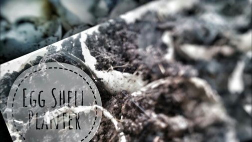 Egg Shell Planter / Egg Tray Planting - YouTube