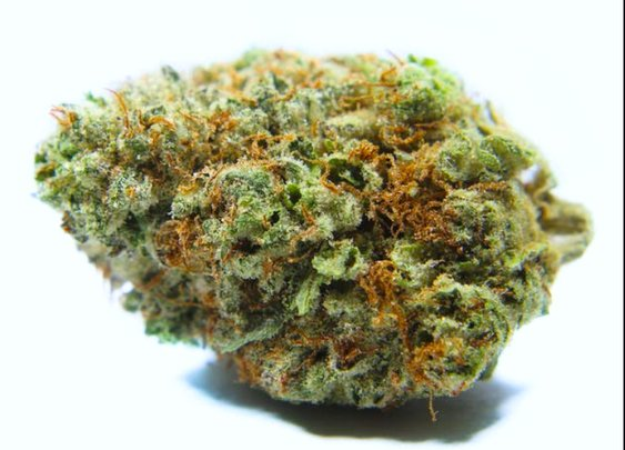 Tri-Fi Cookies Cannabis Strain | Hybrid Marijuana | PotValet