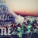Grow Tomato Plant in Plastic Hanging Bottle | Vertical Gardening | No Space Garden