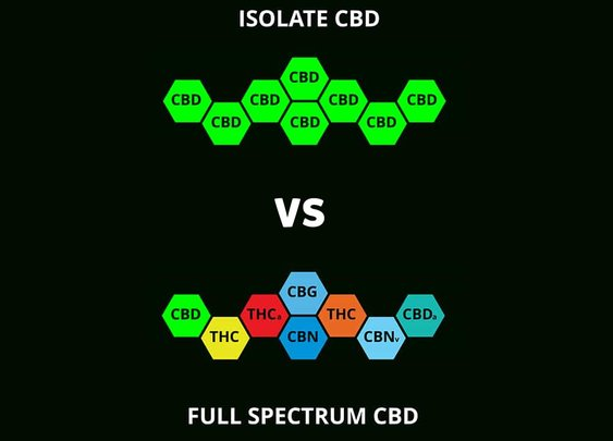 "CBD Isolate vs. Full Spectrum: Not Feeling ""Isolated"" While Getting a ""Full"" Perspective - Kushie Bites"