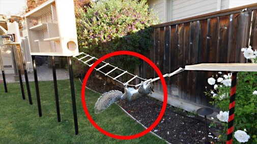 Building the Perfect Squirrel Proof Bird Feeder - YouTube