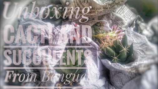 Unboxing: Cacti and Succulents From Benguet | With Cactus and Succulent ID