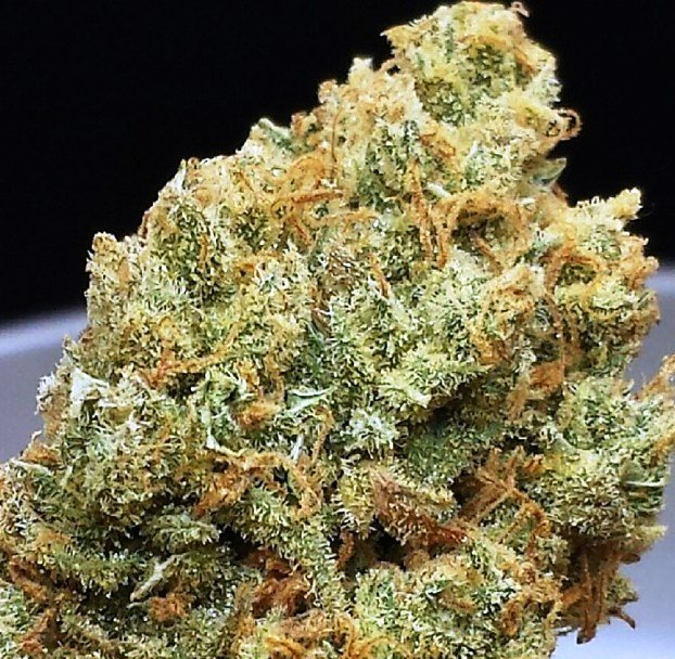 XJ 13 - Sativa | Top Shelf Cannabis Strain | Weed Strain | PotValet