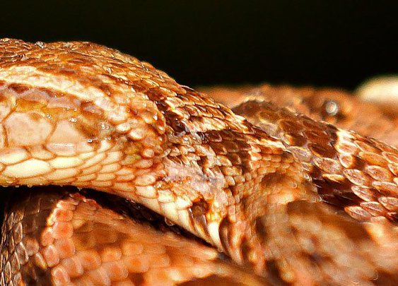 Snake-Venom 'Super Glue' Can Stop Wounds Bleeding in Seconds With a Flash of Light