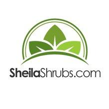SheilaShrubs