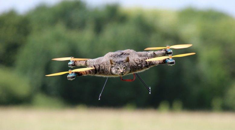 Taxidermy Drones